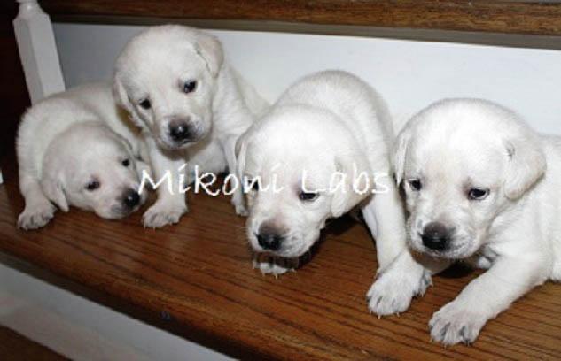 mikoni-white-labs-28-jpg