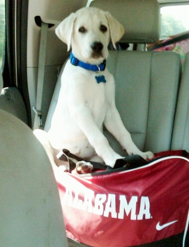 tucker on bama bag.jpg